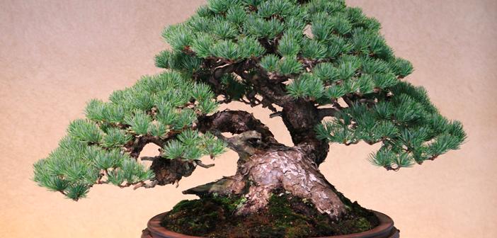 bonsai-bakimi
