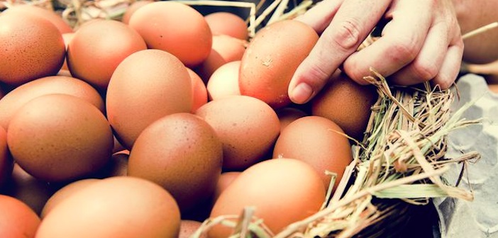 yumurta-rengi