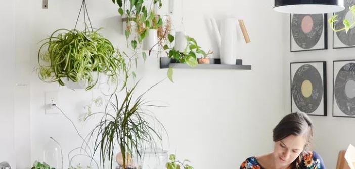 bitki-yapraklari-sararmasi