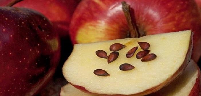 elma-cekirdegi