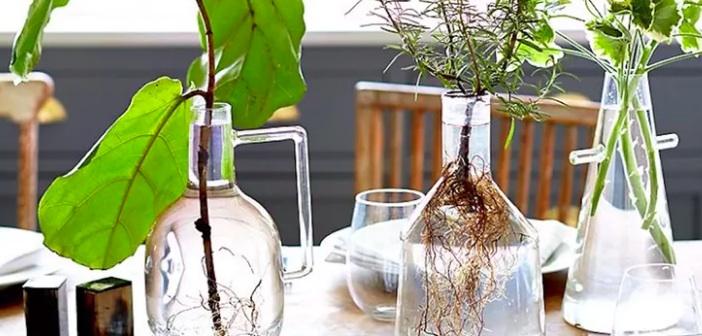 suda-yetisen-bitkiler