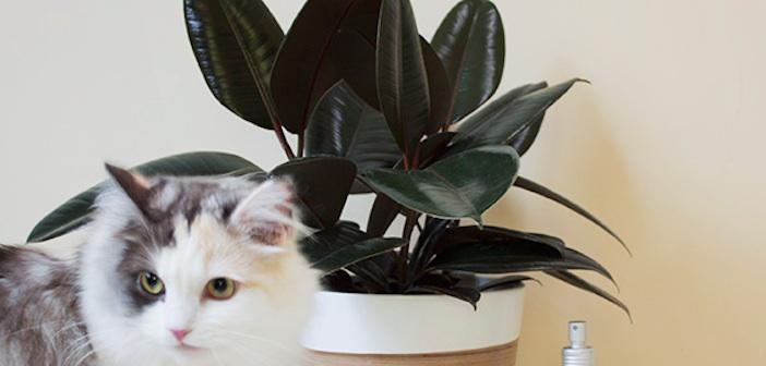 kedi-bitki